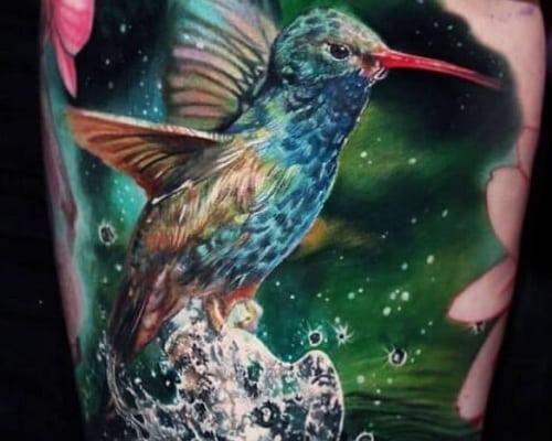 Photography Hummingbird