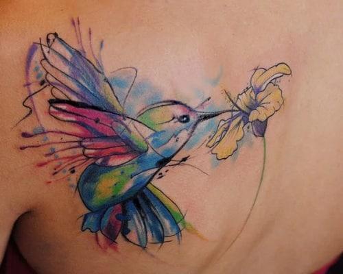 Sucking Nectar Hummingbird
